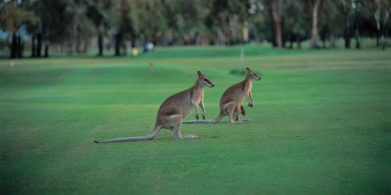 Gold Resorts Sunshine Coast. Minibus Charter | Coast to Hinterland Charters